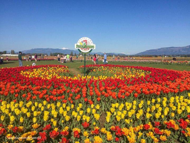 Tulip-Festival-5